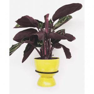 plantwire sort_leerbaek_planteholder