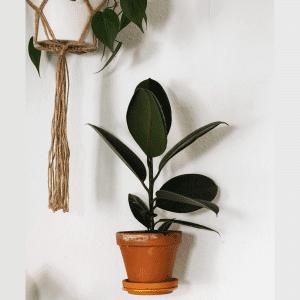 plantwire_leerbaek_groenne planter_indretning