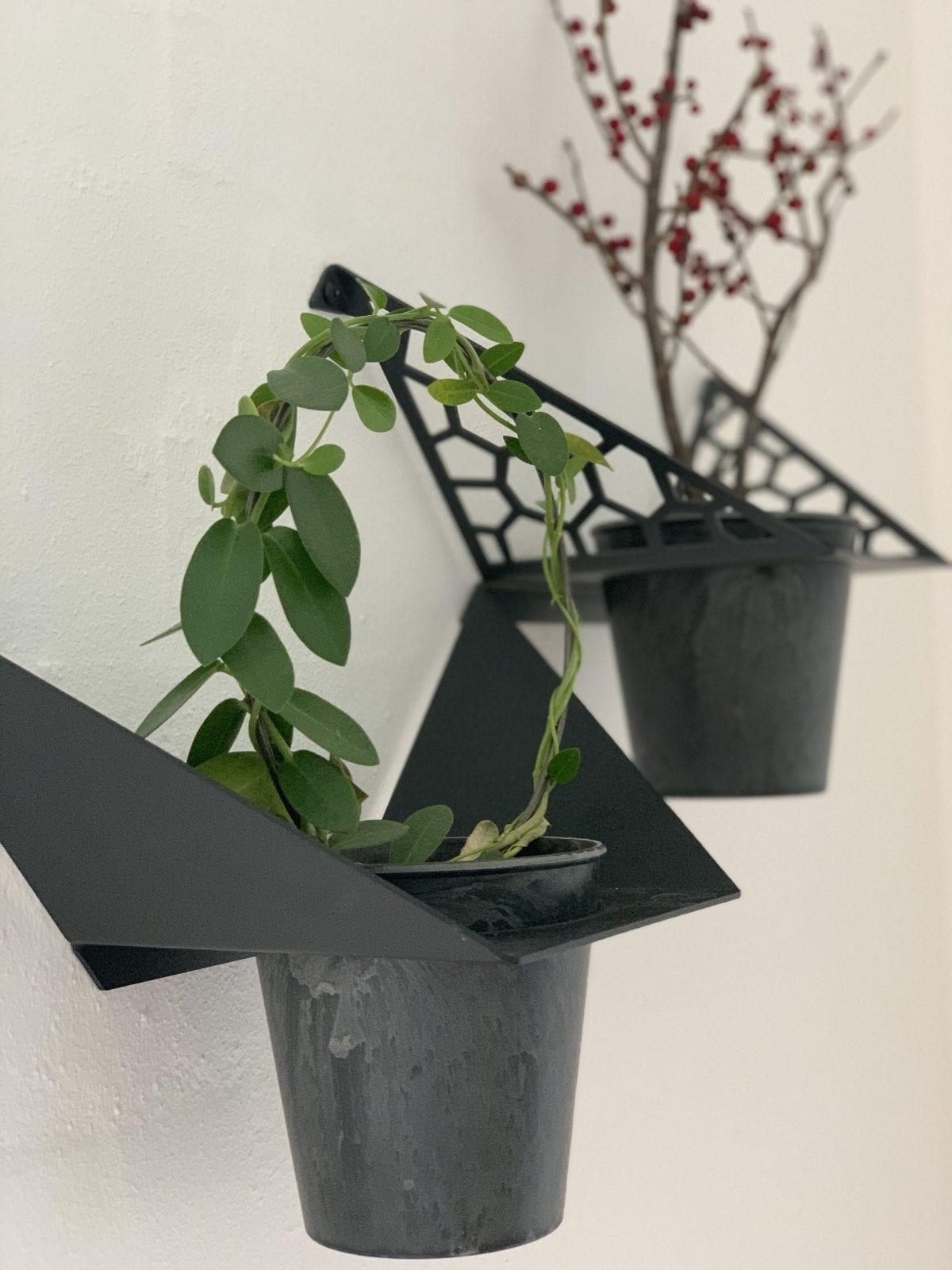 planteophaeng-by-dyb